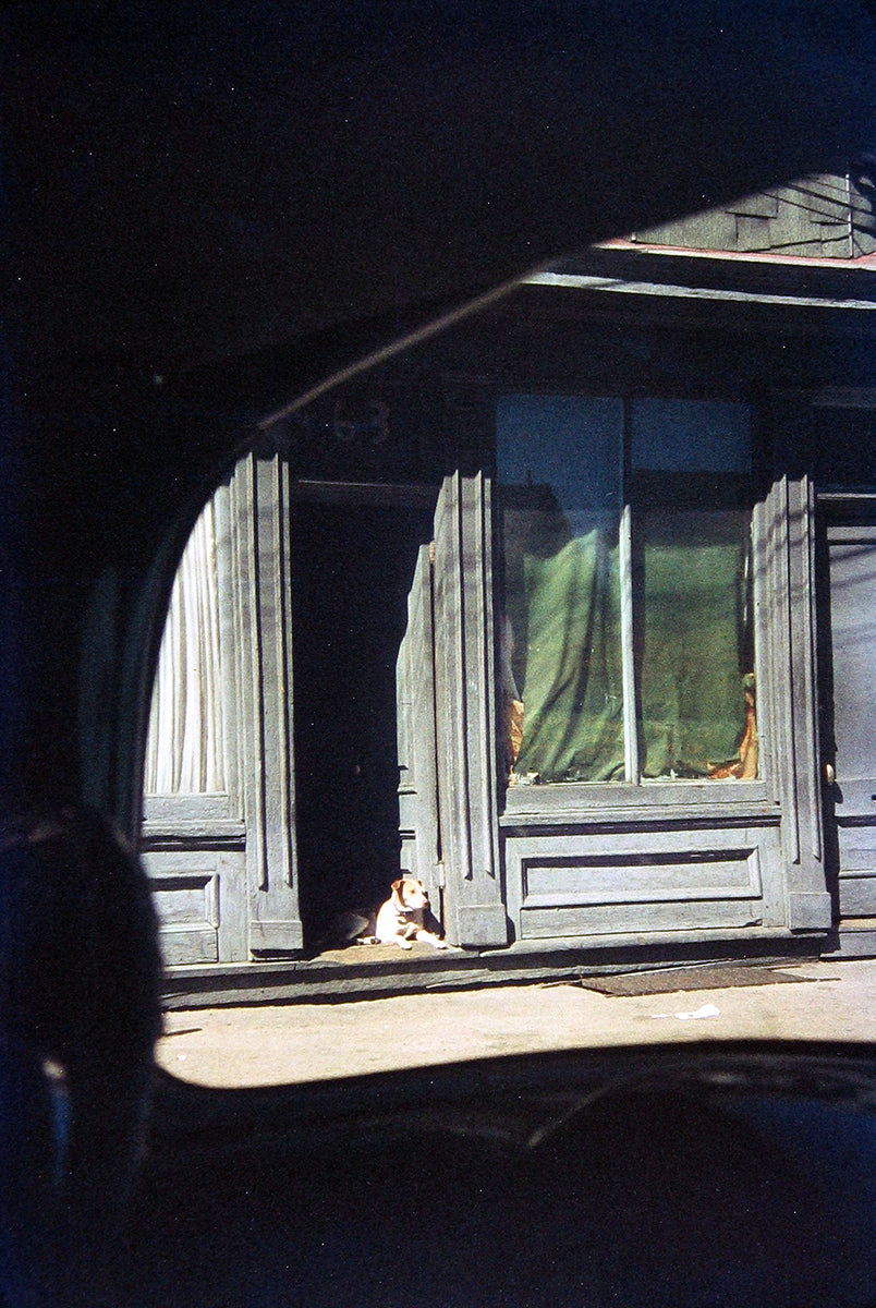 Dog in Doorway, Paterson, 1952