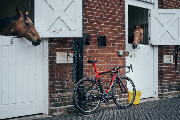 Desire: Pinarello's latest thoroughbred