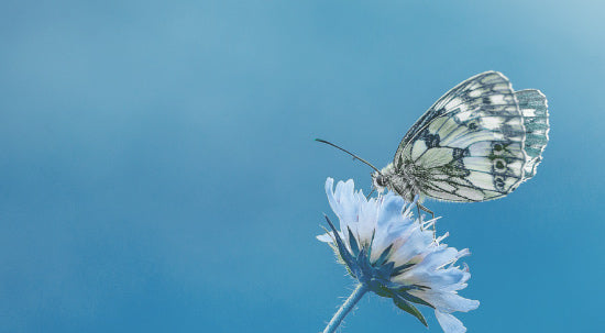 Why Butterflies are a popular theme in Cremation