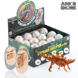 Excavation Game Egg with Skeleton Dino Junior Knows