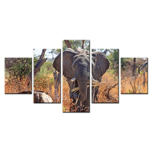 Elephant Safari-5 Panel-Canvas Bros