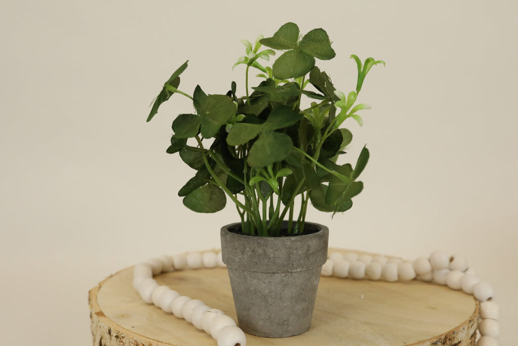 Potted Clover Plant