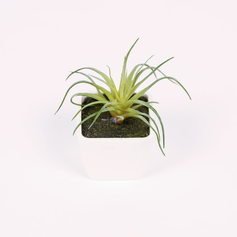 Mini Potted Plants - 4 Styles