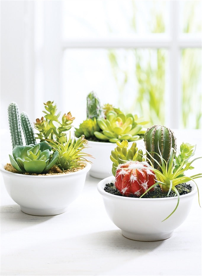 Mini Cactus in Bowl - 3 Styles