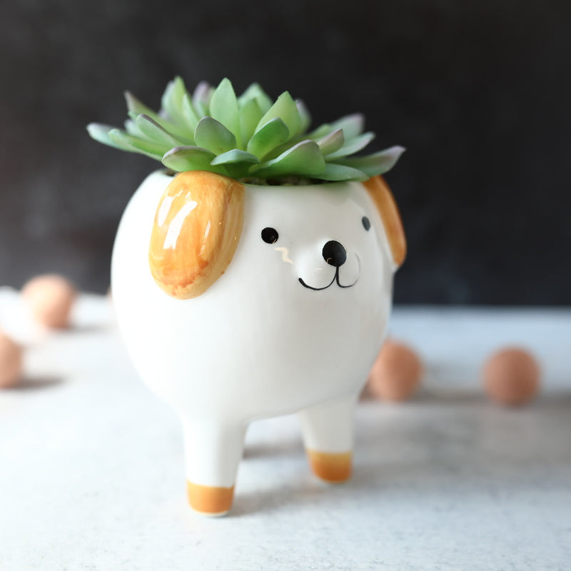 Dog Succulent - 3 Styles