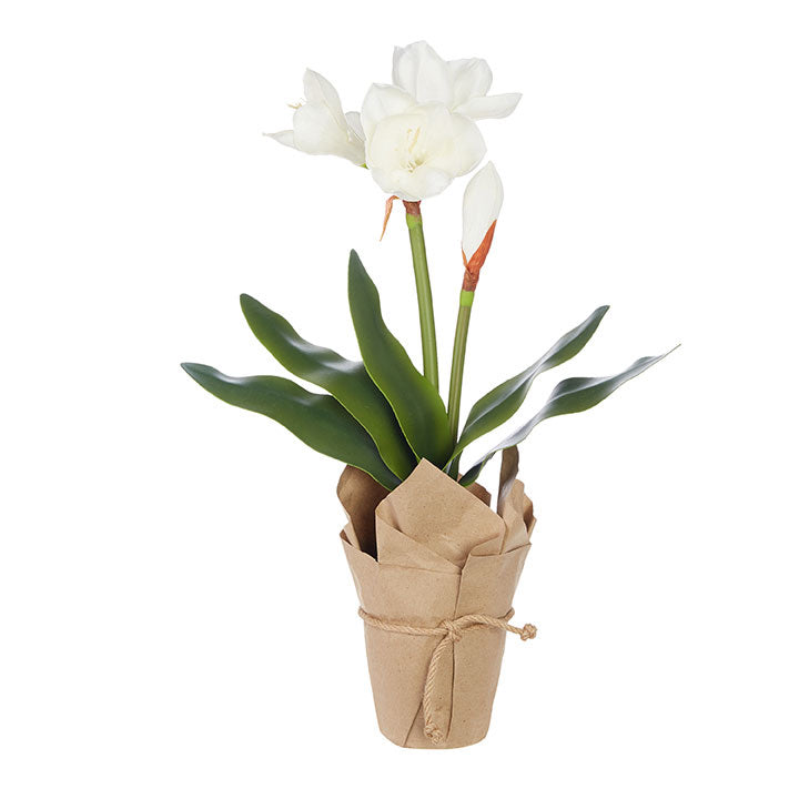 Potted White Amaryllis