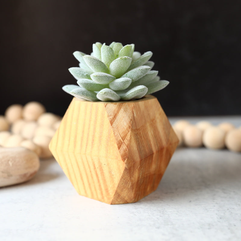 Faux Succulent in Wood Pot - 2 Styles