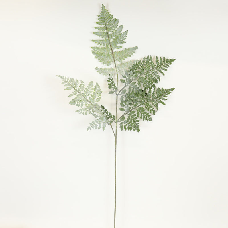 Royal Fern Stem