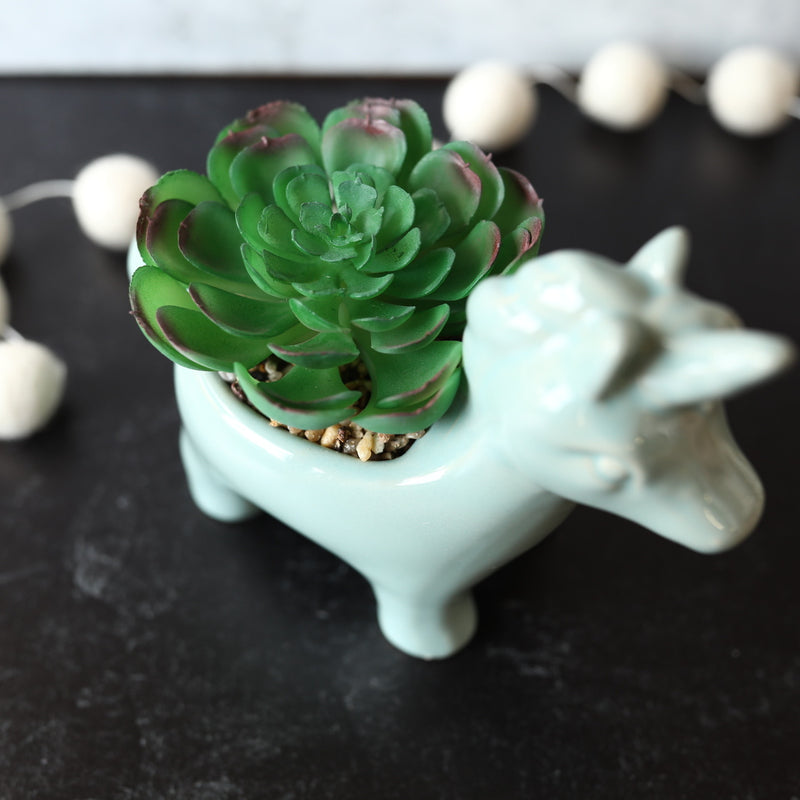 Unicorn Succulent - Blue