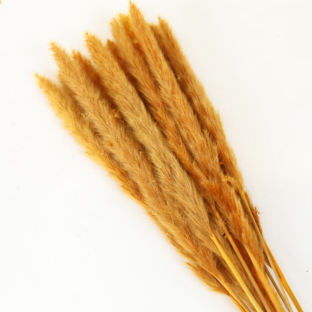 Pampas Grass - Orange