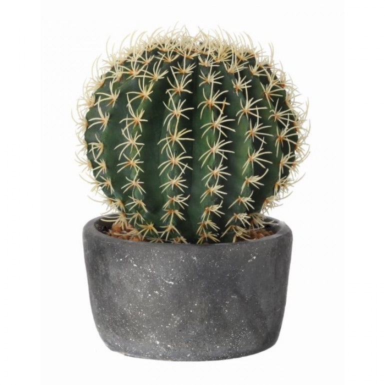 Barrel Cactus in Cement Pot - Medium