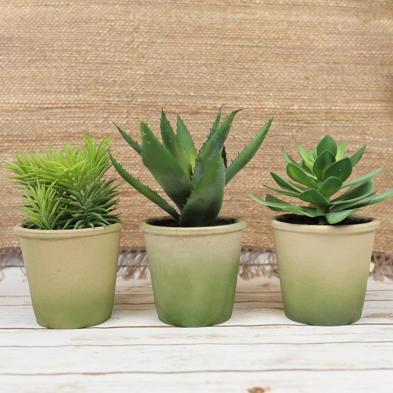 Ombré Potted Succulents - 3 Styles