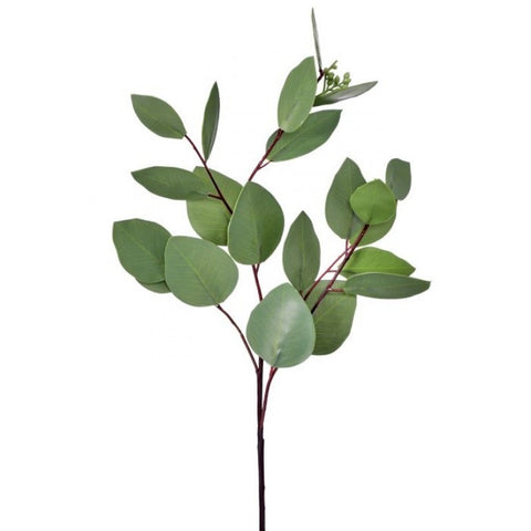 Long Leaf Eucalyptus Stem