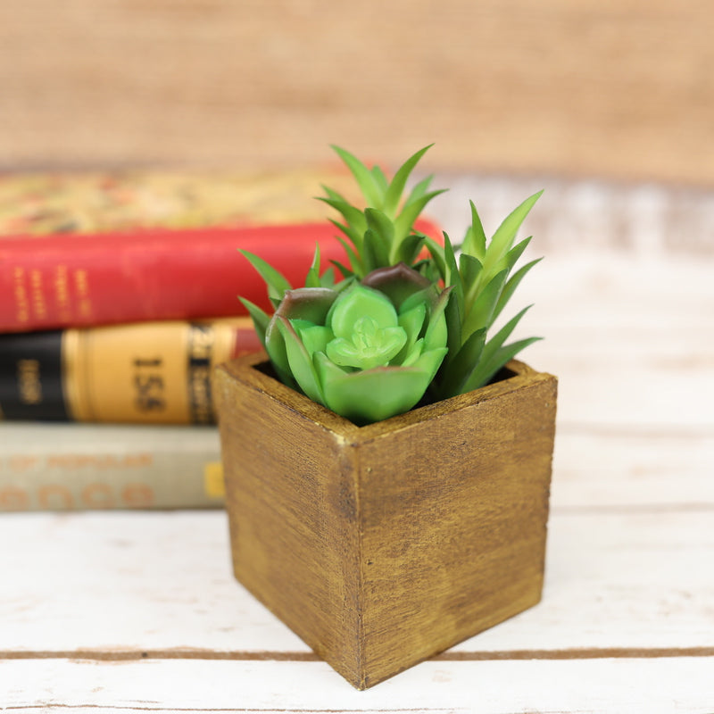 Wood Potted Succulent - 4 Styles