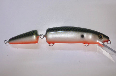 Tennessee Shad Orange Belly