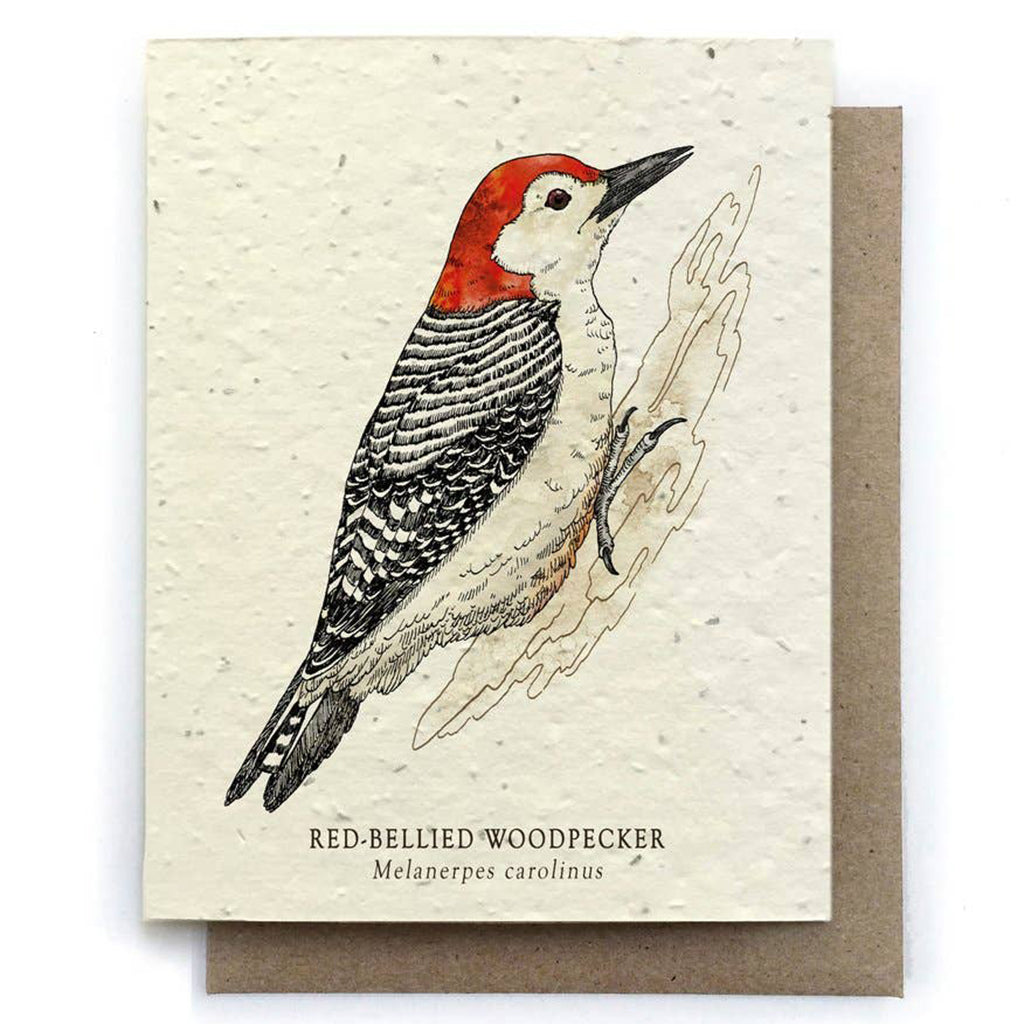 Woodpecker Plantable Seeded Card - Salix Intimates