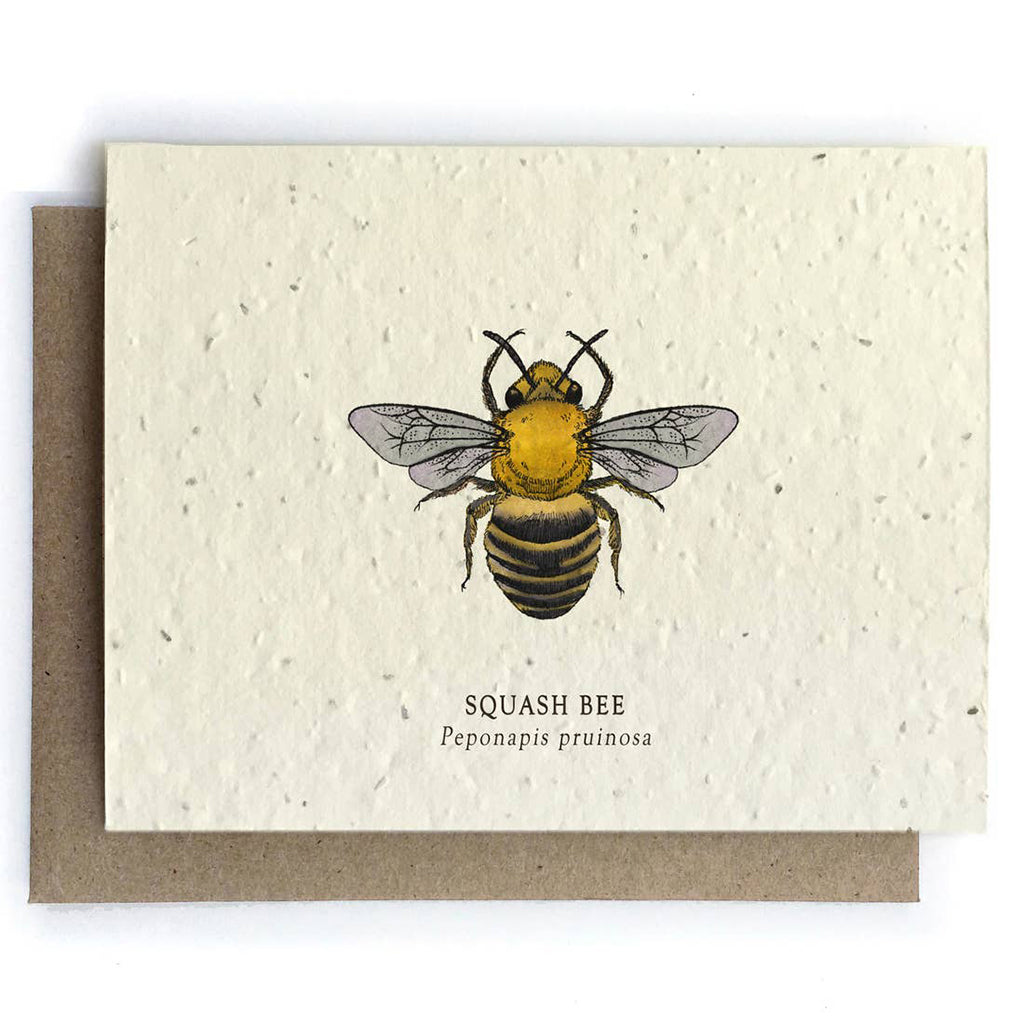 Squash Bee Plantable Seeded Card - Salix Intimates