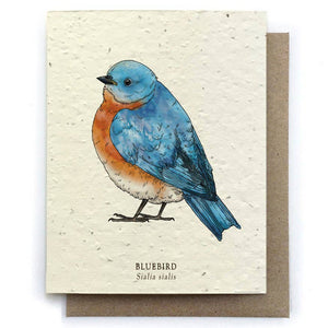 Bluebird Plantable Seeded Card - Salix Intimates