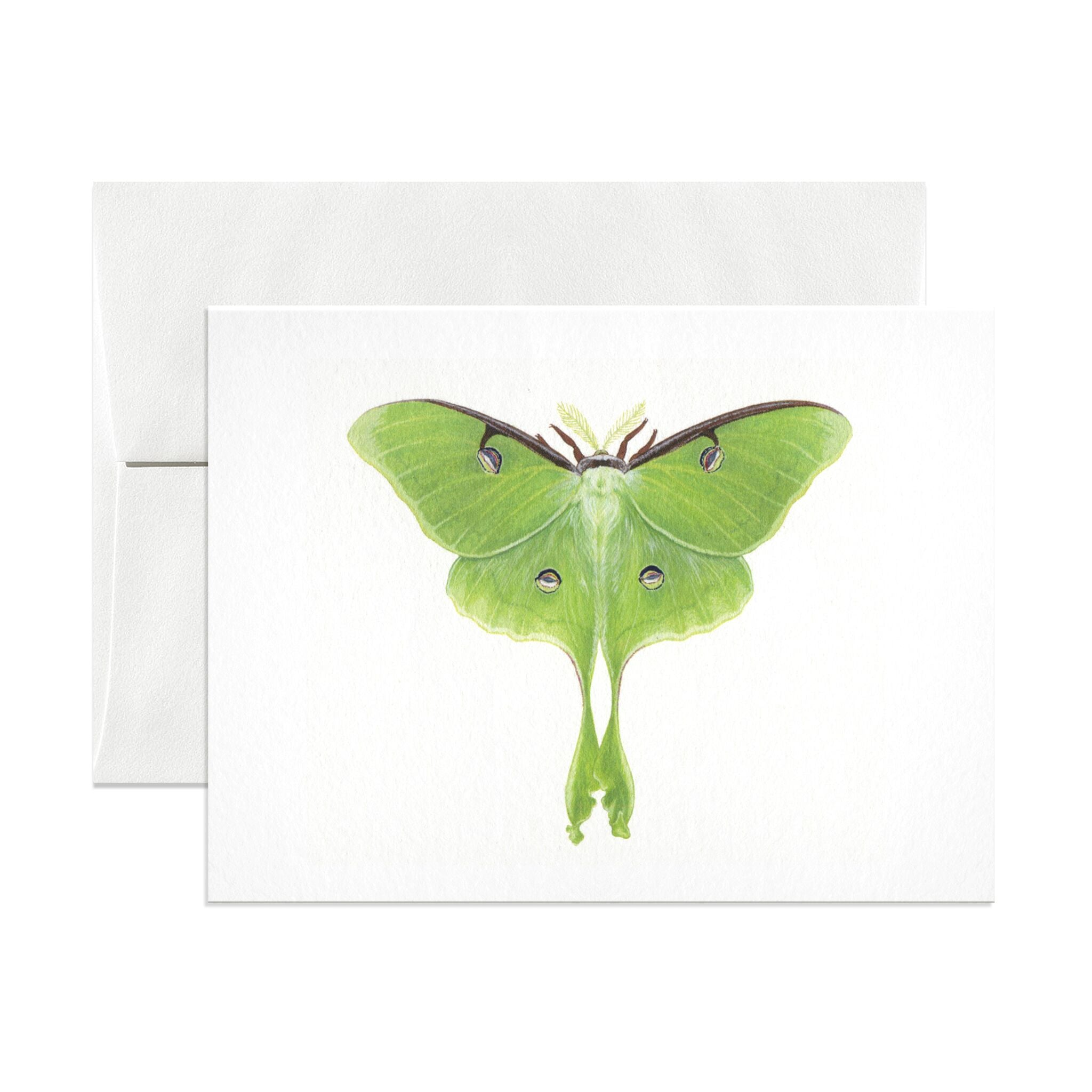 Luna Moth Greeting Card - Salix Intimates