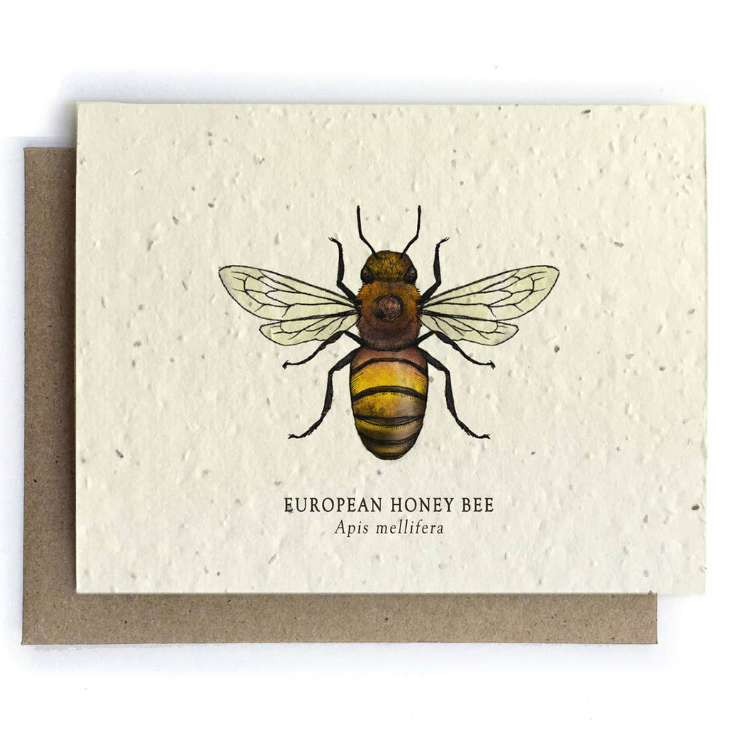 Honey Bee Plantable Seeded Card - Salix Intimates