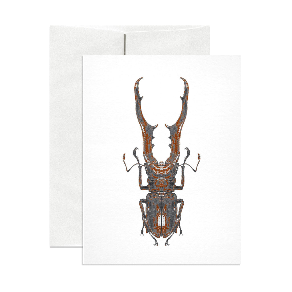 Stag Beetle Greeting Card - Salix Intimates