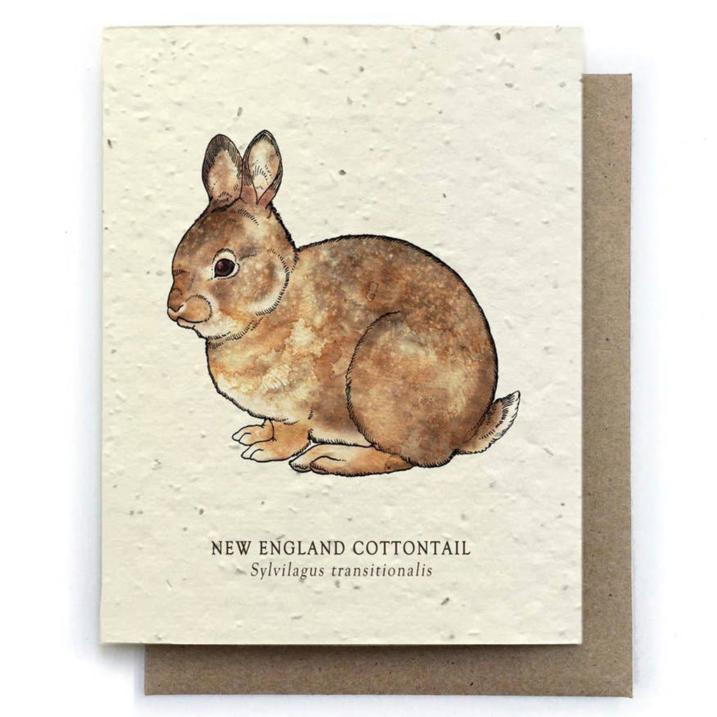 Cottontail Rabbit Plantable Seeded Card - Salix Intimates