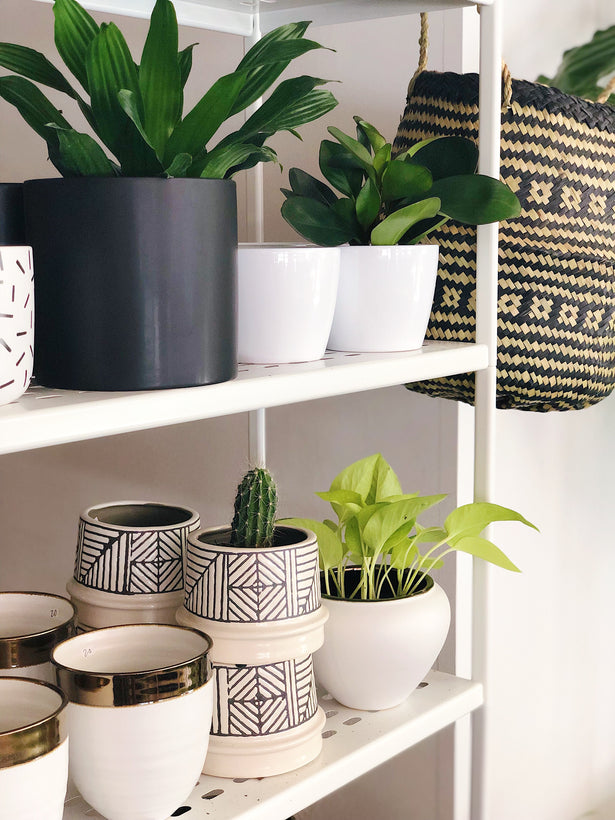 Botanica Pots + Baskets