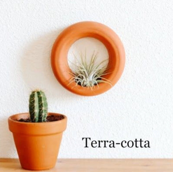 Air Plant Wall Hanger by Badgerow Ceramics