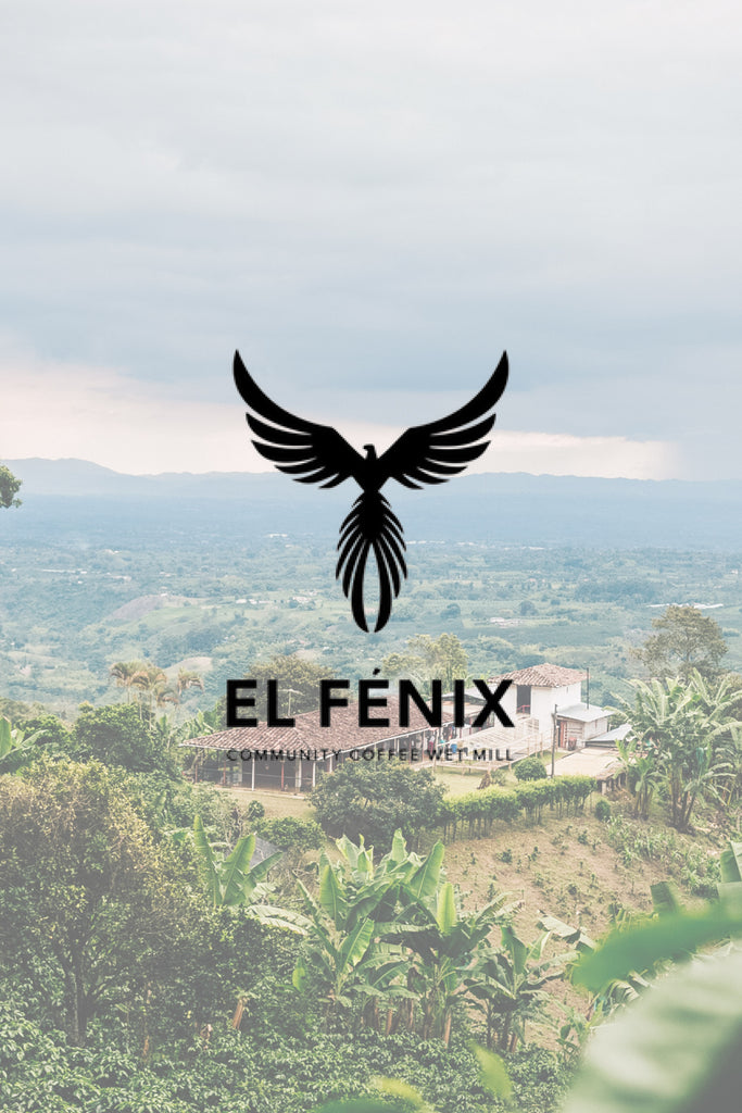 The Latest El Fénix Update