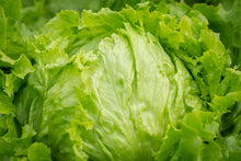 Load image into Gallery viewer, Lettuce