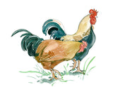 CH009 - cockerel and chicken art print by Mark Huskinson