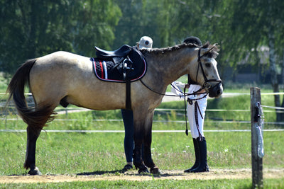 How to clean your tack - best tips!