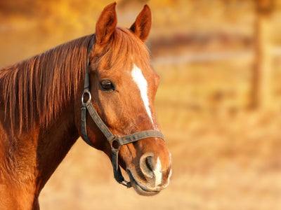 Buying your first horse? Best tips!