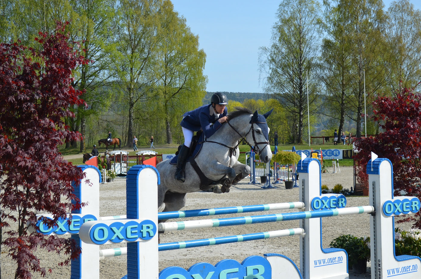 Top showjumping tips
