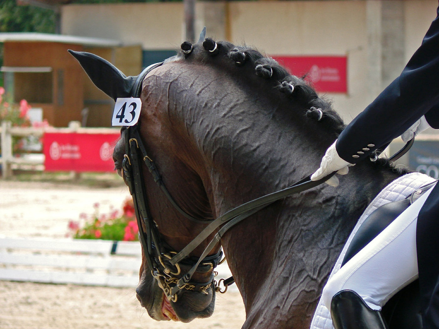 Why Is Dressage Important For Jumpers Too Ophena