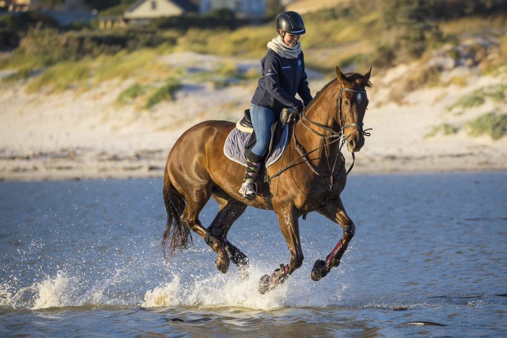 Safety risks when riding horses