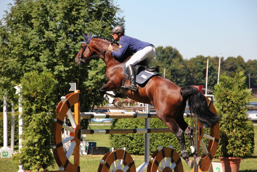 Horse show: prepare properly
