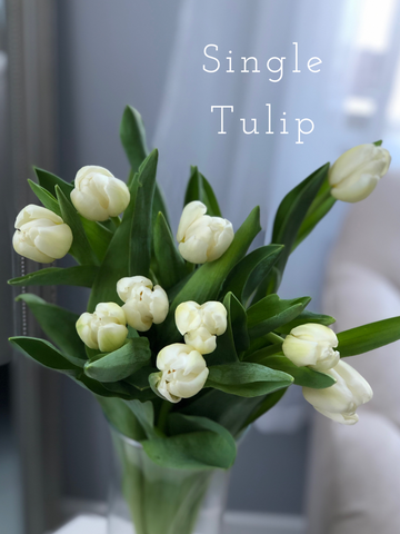 Tulips House of Fiori Inc Red Deer Florist Vancouver Florist