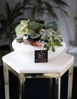 Succulent Planters | Vancouver & Red Deer Florist | House of Fiori