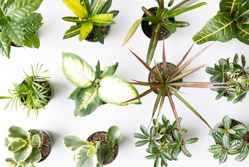 Tropical Plants Small | Vancouver Florist | House of Fiori