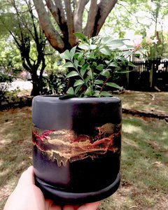Hand Painted Pot Plant