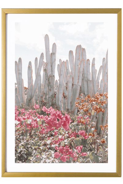 Virgin Gorda Art Print - Cacti #4