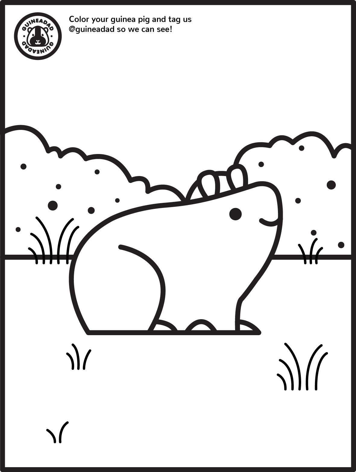guinea pig coloring page