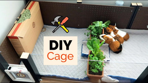 DIY cage for guinea pigs