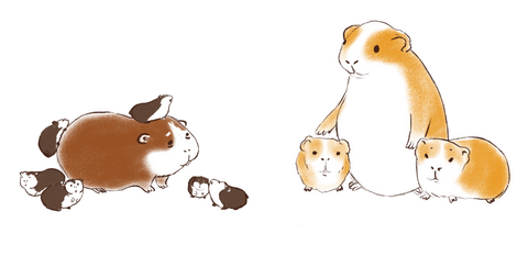 guinea pig hamster difference