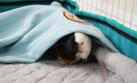 GuineaDad liner in midwest cage for guinea pigs