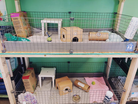 donating to guinea pig rescues