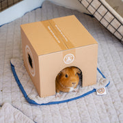 Guinea Pig laying inside of a GuineaDad Crunchy Condo Hidey House with Pee Pad underneath