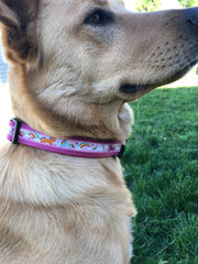 Unicorn & Rainbow Dog Collar - Fetch Dog