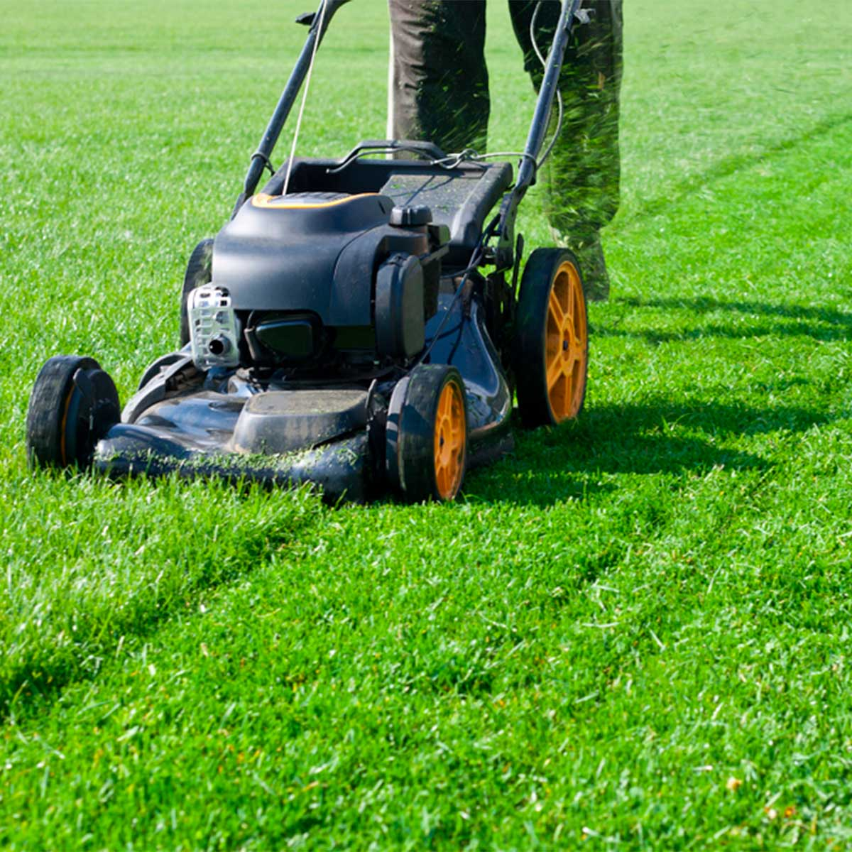 Could Mowing Your Lawn Cause Environmental Damage?